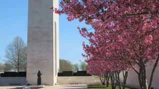 Cherry blossom trees at Netherlands American Cemetery