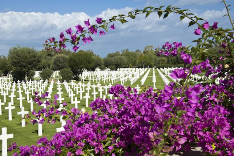 Purple flowers fill the foreground and headstones fill the background.