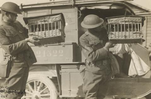 Historic photos shows men in uniform holding cages in hand.